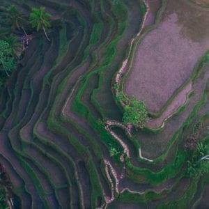 Bali's most beautiful rice Terrace Tegallalang Rice Terrace